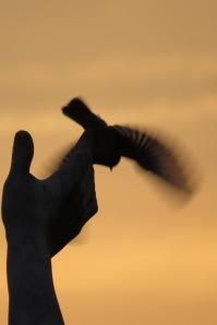 Bird in the hand 2