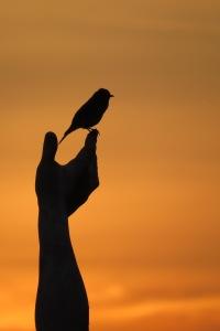 Bird in the Hand 4