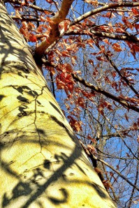 Winter shadows 2