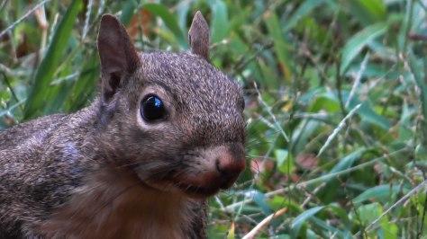 Squirrel Again