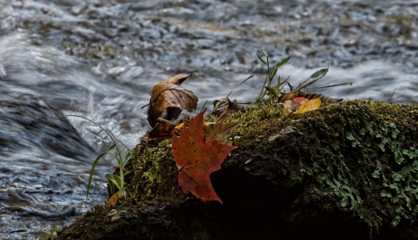 Autumn 2 2014