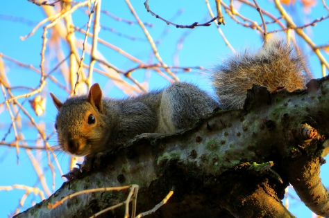 October squirrels 3