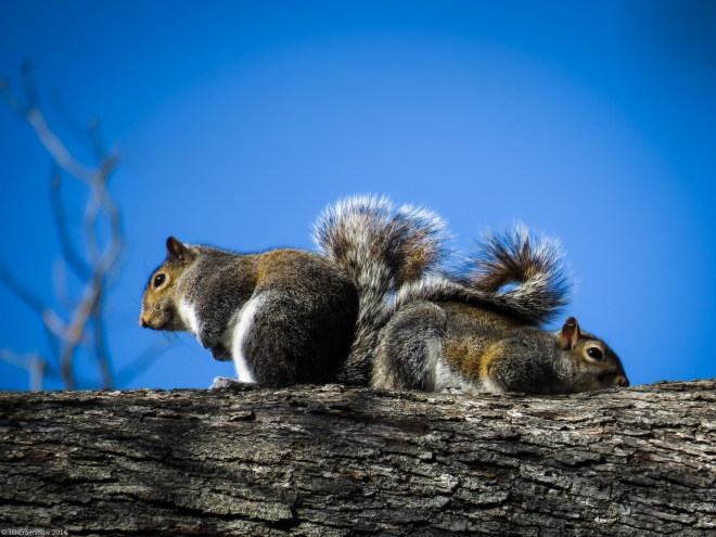 I've Got Your Back Squirrels 2