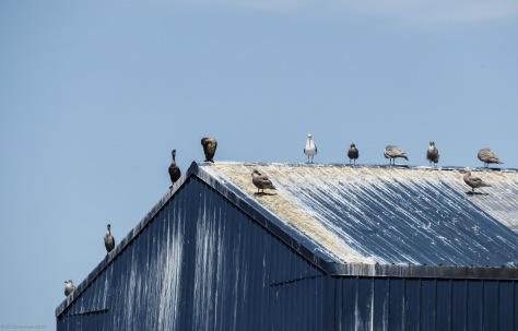 Seattle Birds