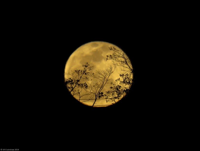 Vigilant Moon