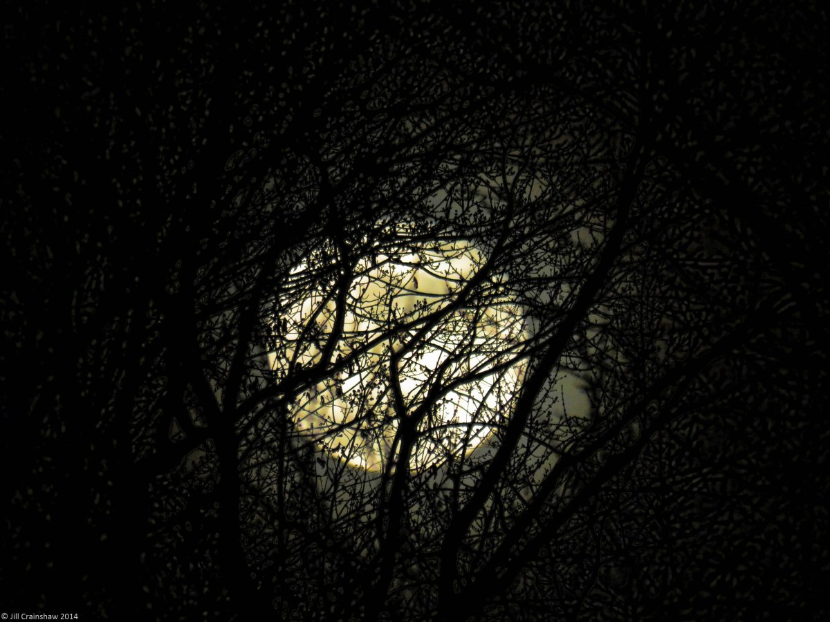 long-night moon