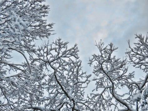 Winter Drama II