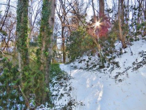 Winter Sunlight 2